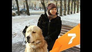 Активистки создают базу собак-доноров для переливания крови больным животным