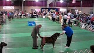 Sound 182 pounds Central Asian Shepherd Winner UKC Premier  Dog Show