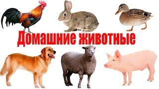 Развивающий мультик для детей Как говорят домашние животные.