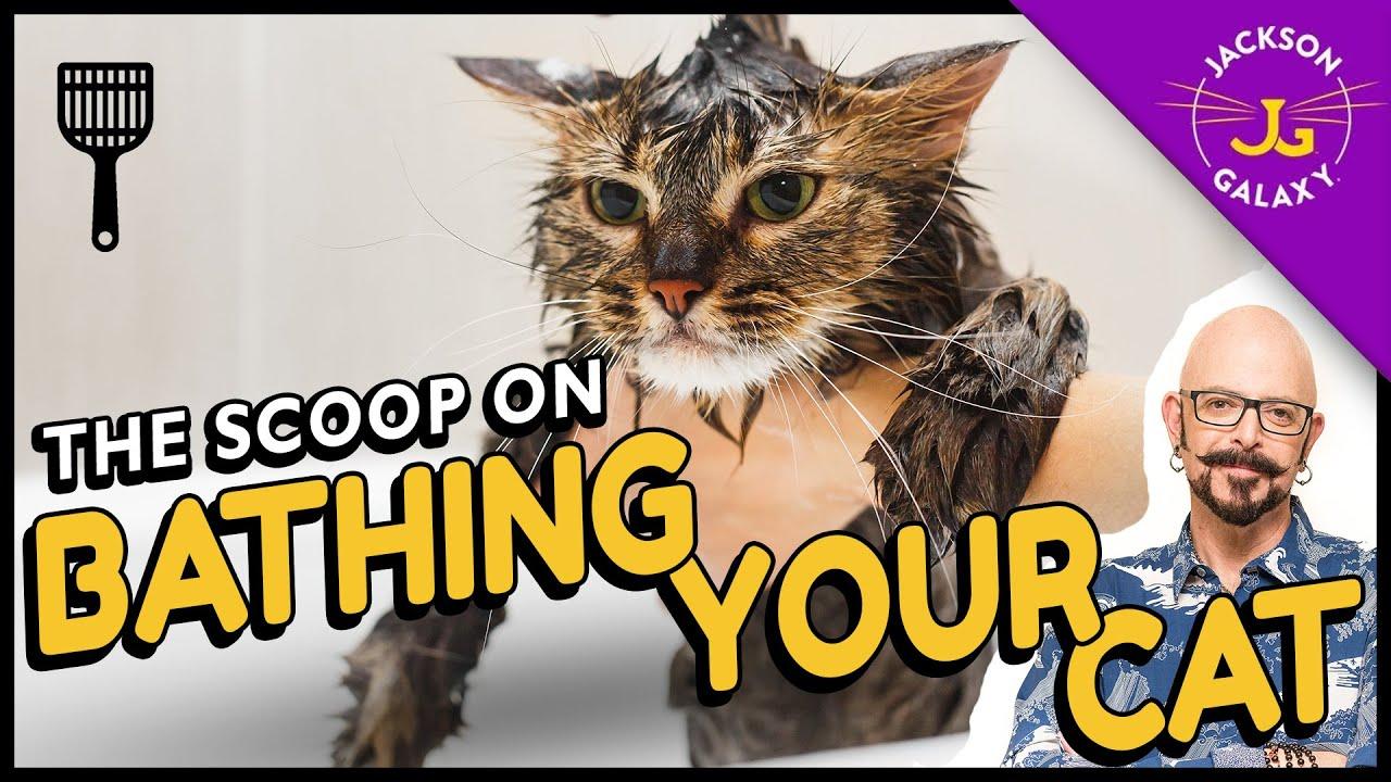 How Often Should I Bathe My Cat Jackson Galaxy