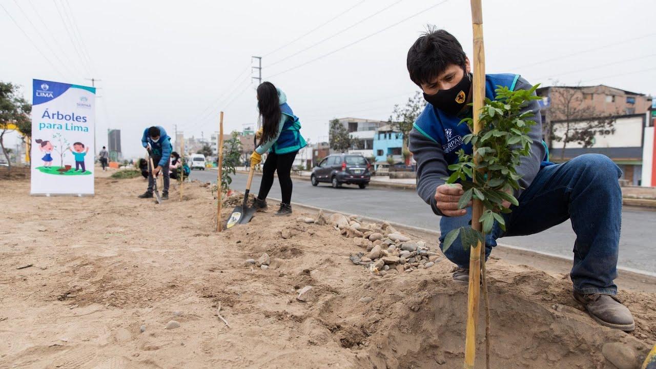 Iniciamos la plantación de 2,000 árboles en San Juan de Miraflores