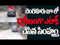 Lion Attacks Car in Bangalore Bannerghatta National ZOO Park | Exclusive Video | Top Telugu TV Видео