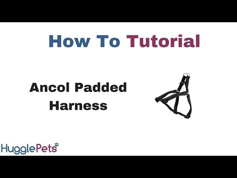 How to fit a padded dog harness from Ancol