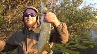 Рыбалка на щуку в сентябре Ловля щуки на спиннинг