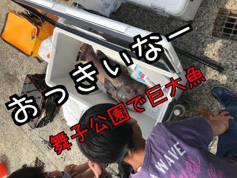 【巨大魚】舞子公園ですごい魚が!fishigmax垂水店2019/04/21