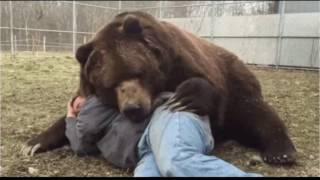 Невероятная дружба диких животных и людей