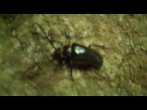 Beetle Hunter