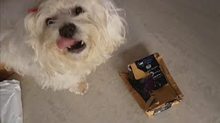My DOG UNBOXES her own GIFT | Gift Unboxing 2 | Ss Vlogs :-)