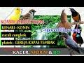 Masteran Ampuh Untuk Isian Burung Kacer Burung Murai Batu Dan Burung Cucak Ijo  Mp3 - Mp4 Download