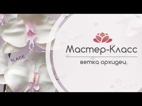"""Мастер - Класс """"Ростовая ветка Орхидеи"""""""