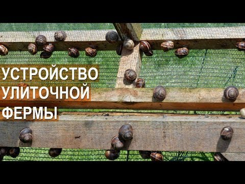 Улиточная ферма Сергея