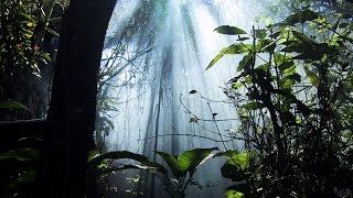 Ellis Dee & Fearless - 1996 Jungle DnB
