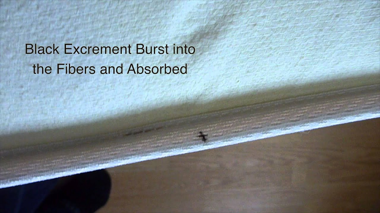 How To Inspect For Bed Bugs We Find Several Baby Bed Bugs Youtube