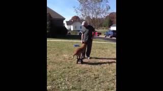 Pak Masters Dog Training Teaching An Obedience Heel