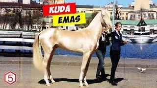 Disebut Kuda Titisan dari Surga, Kuda Emas Akhal-Teke Jadi Kuda Tercantik di Dunia