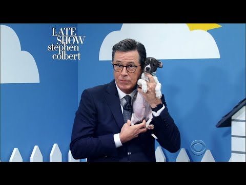 Download Youtube: The Late Show 'Rescue Dog Rescue' With Ellie Kemper