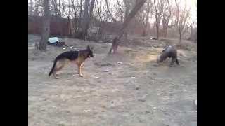 пьяный и собака