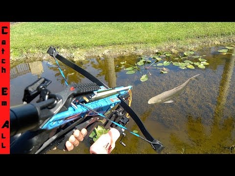 CROSSBOW FISHING From TRUCK!