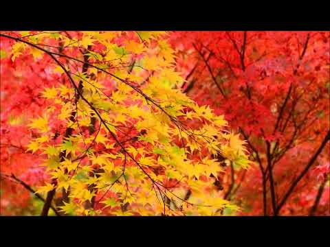 Autumn Elegy/James Michael Stevens