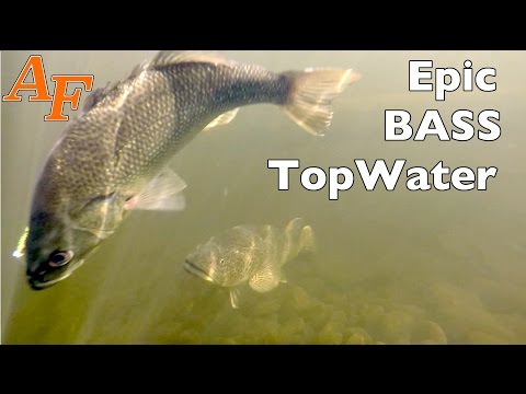 Epic Topwater Kayak Bass Fishing Washpool Creek Day 6 of trip  Andy's Fish Video EP.319