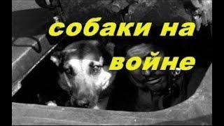 Собаки на Великой Отечественной войне .