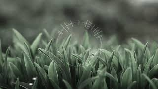 [FREE] Lil Peep Type Beat 'Grass'(PROD By OmidZF)