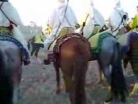 Festival of horses in youssoufia city Morocco