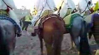 Festival of horses in youssoufia city Morocco thumbnail