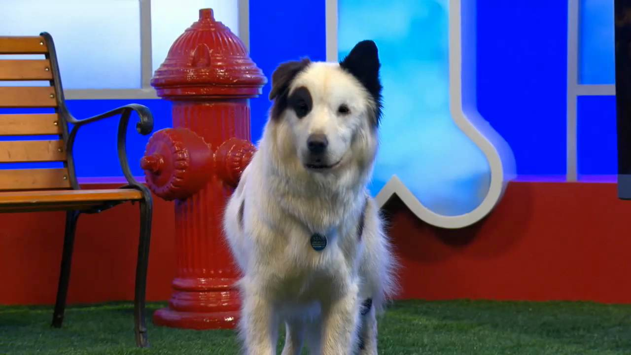 Dogs Got Talent - Dogs Rule! Cats...Not So Much - Disney Channel Official