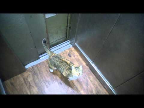 Smart cat uses elevator