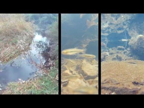 Underwater episode 31: Mitchell's Grove (NP) (site22/location1)