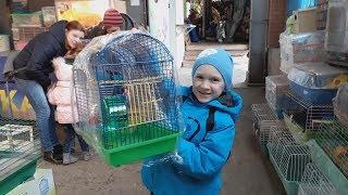 Рынок домашних животных Хомяки Рыбки Кролики Выбираем и покупаем хомяков