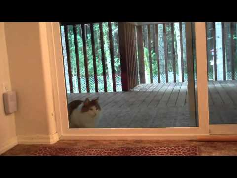 kitten ringing doorbell 1