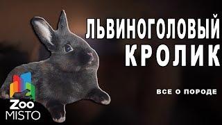 Львиноголовый кролик - Все о виде грызуна | Вид грызуна - львиноголовый кролик