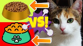 The Pet Is Testing: Wet Cat Food Vs Dry Cat Food, Adorable Cats