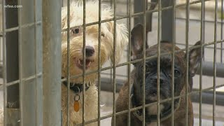 More than 100 animals rescued from double-wide trailer, Collin County officials say
