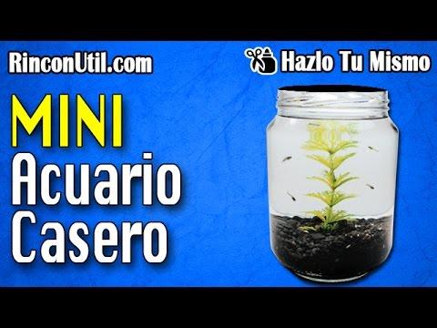 Mini Acuario Casero