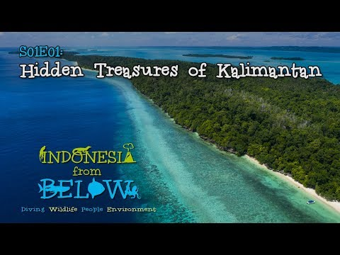 Hidden Treasures of Kalimantan | Indonesia from Below (S01E01) | [UHD/4K]