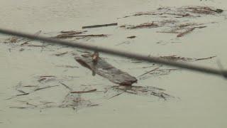 Heavy Rain Hits Western Washington