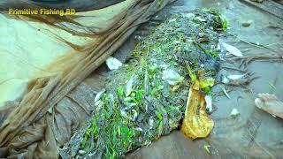 Very Nice Fresh Country Fish Catching in Rainy Season। Traditional Net Fishing River