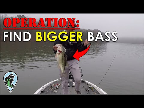 My Plan For Bigger Bass In 2020! | Bass Fishing Insights