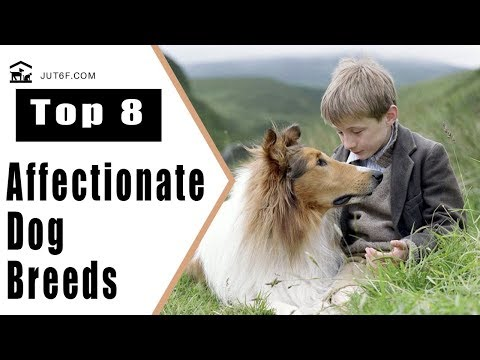 Top 8 Affectionate Dog Breeds