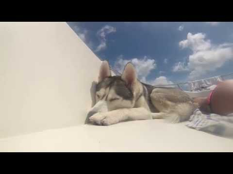 Boat Rocks Husky Puppy to Sleep