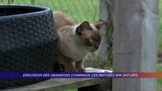 Yvelines | Explosion des abandons d'animaux, les refuges SPA saturés