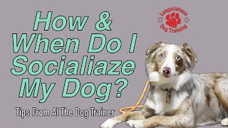 How And When You Should Socialize Your Dog - Tips From Al The Dog Trainer