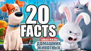 20 фактов о мультфильме Тайная жизнь домашних животных | Movie Mouse