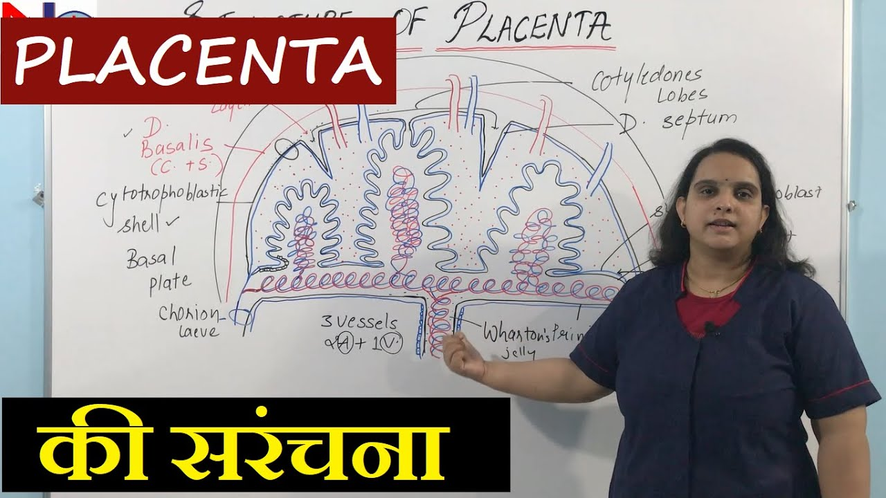 Placenta Structure in Hindi | Nursing Lecture