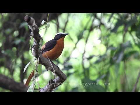Birdwatching The Gambia: Kotu Creek