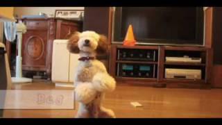 フィルムドッグ(タレント犬)のトリック集です。 PVのようになりまし...