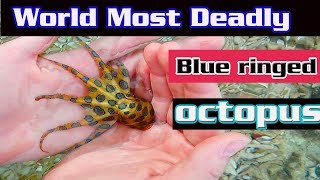 World Most Deadly Blue ringed octopus || Facts About Blue Ringed Octopus